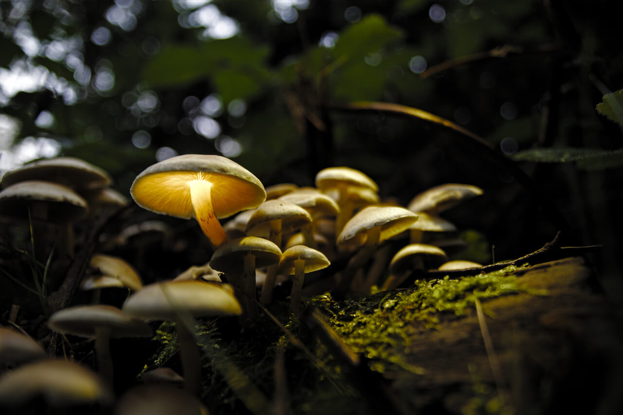 Lightpainting-mit-Pilzen